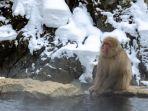jigokudani-monkey-park.jpg