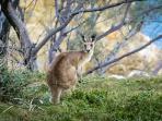 kanguru_20161204_230106.jpg
