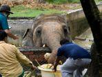 kavaan-gajah-paling-kesepian-di-dunia-sedang-direlokasi.jpg