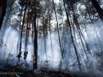 kebakaran-hutan-lindung-gunung-lawu_20180912_113743.jpg