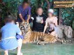 keluarga-turis-terekam-berpose-dengan-seekor-harimau-yang-dipaksa-keluar-untuk-foto.jpg
