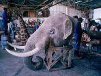 kepala-gajah-diawetkan_20180308_152807.jpg