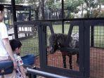 keramaian-branchsto-equestrian-park.jpg