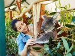 koala-jsd.jpg