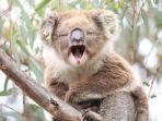 koala_20180417_125925.jpg