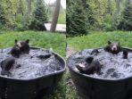 kolase-tangkap-layar-beruang-hitam-takoda-asyik-mandi-saat-musim-semi.jpg