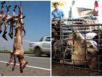 kondisi-mengenaskan-anjing-di-kamboja-hingga-dijual-di-pinggir-jalan-dekat-tempat-wisata.jpg