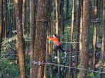 kopeng-treetop-11.jpg