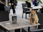 kucing-di-istanbul-turki.jpg