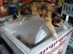 kucing_20170623_220431.jpg