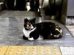 kucing_20180227_112036.jpg