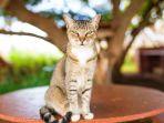 kucing_20180629_094626.jpg