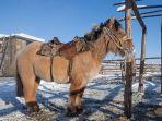 kuda-yakutia.jpg