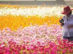 ladang-bunga-ciaotou.jpg