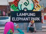 lampung-elephant-park.jpg
