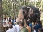 momen-mengharukan-seekor-gajah.jpg