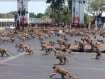 monyet-di-jalanan-thailand.jpg