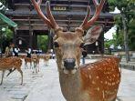 nara-park-jepang_20180505_101332.jpg