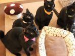 nekobiyaka-kafe-berisi-kucing-hitam-di-jepang.jpg