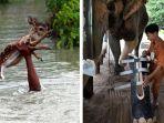 orang-yang-memberikan-pertolongan-untuk-hewan_20170601_120000.jpg