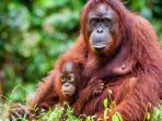 orangutan_20170916_122328.jpg