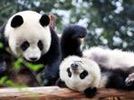panda_20161229_132027.jpg