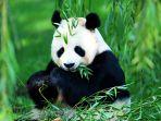 panda_20170309_201140.jpg