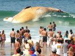 paus-yang-terdampar_20170219_225808.jpg