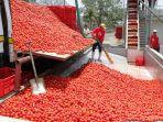 pekerja-pabrik-pengolahan-tomat_20171014_103241.jpg
