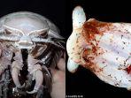 penemuan-spesies-baru-di-laut-dalam-indonesia_20180516_145827.jpg