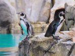 penguin-di-ocean-dream-samudra.jpg