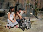 penguin-di-taman-safari-prigen.jpg