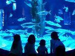 pengunjung-jakarta-aquarium.jpg