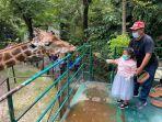 pengunjung-yang-memberi-makan-jerapah-di-kebun-binatang-surabaya.jpg