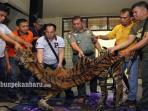 perdagangan-kulit-harimau_20161127_112332.jpg