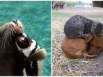 persahabatan-binatang-beda-spesies_20180222_211108.jpg