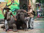 pertunjukan-elephants-story.jpg