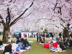 piknik-di-bawah-pohon-sakura.jpg