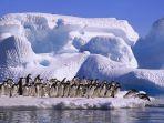 pinguin-di-kutub-selatan_20170719_151926.jpg