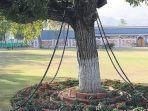pohon-ini-ditahan-dan-rantai-oleh-kolonial-inggris.jpg