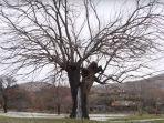pohon-murbei_20180219_173435.jpg