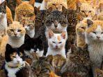 pulau-kucing.jpg