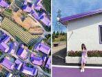 pulau-ungu-di-korea-selatan.jpg