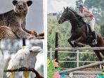 ragam-satwa-di-lembang-park-zoo-bandung.jpg