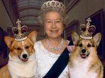 ratu-elizabeth-ii-dan-anjing-peliharaannya_20180905_190137.jpg