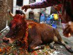 sapi-yang-menjadi-bagian-dari-perayaan-diwali-di-india.jpg