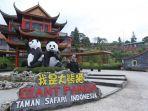 seekor-panda_20171104_213042.jpg