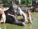 spa-gajah-di-india.jpg