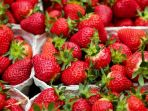 strawberry_20180816_093327.jpg