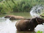 suaka-gajah-boon-lott-atau-boon-lotts-elephant-sanctuary-bles-sukhothai.jpg